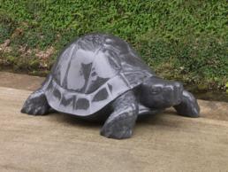 Tortoise – Kilkenny Limestone