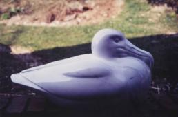 Albatross – Carrara Statuary Marble