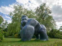 Gorilla – Kilkenny Limestone