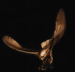 Osprey – Bronze