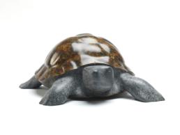 Tortoise – Bronze