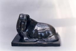 Walrus - Belgian Fossil Marble